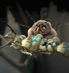 """""""This is not my beautiful house. This is not my beautiful wife."""" Surprised owl is surprised."""