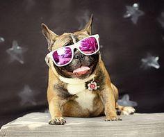 Zoe the French Bulldog, my little love bug!