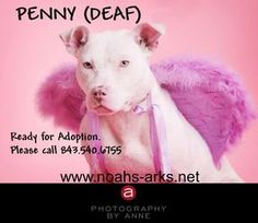 PENNY is an adoptable Pit Bull Terrier Dog in Hilton Head Island, SC. PENNY is a 11 month old adorable Pitbull Mix that was rescues after being thrown out of a car window into a ditch. A couple witnes...
