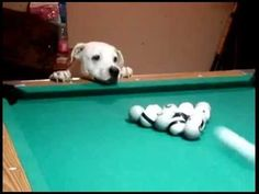10 Best Pool Playing Pooches Who Pot Balls Like Pros - Rescue Dog News