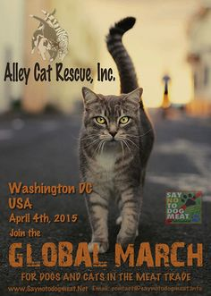 Will You March to Help Put an End to the Cat Meat Trade? | Catster