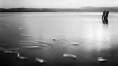 silenziosamente in movimento... #lago #fotografia
