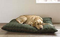 Your dog may not care about the stylish plaid on our new pillow bed, but he'll love its comfort.