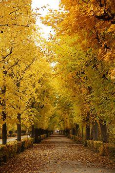 Schönbrunn Palace Gardens, Vienna - check!