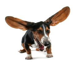 Pin By Petface On Stockists Duck Sausage Sausage Dog Chews