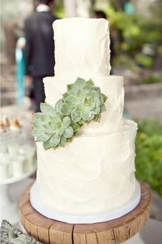 LOVE the succulents on this simple cake