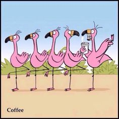 Flamingo on Coffee