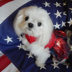 Patriotic girl, I just can't get enough of there little babies. Wish I had 100.....king size bed full anyway!