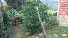 Casa en Arriendo - Otras, Cúcuta | Ciencuadras Plants, Two Story Houses, Real Estate, Tiles, Hair Style, Plant, Planets