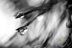 www.melancholic.photos #fineart; #art; #fineartposter; #art #photoposter; #print; #prints; #photoprint; #artprint; #artwork #abstract #nature