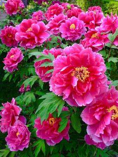 Flowers my Inspiration Beautiful Flowers Garden, All Flowers, Pretty Flowers, Flower Images, Flower Photos, Virtual Flowers, Beautiful Flowers Wallpapers, Peonies Garden, Colorful Garden
