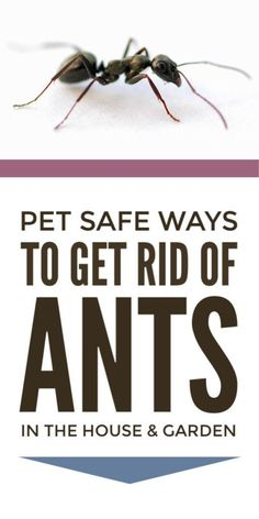 Get Rid Of Toxin Get rid of ants in the house, garden and yard naturally using these DIY pet safe pest control techniques including vinegar, cinnamon, baking soda, essential oils and more. Control Techniques, Get Rid Of Ants, Household Pests, Best Pest Control, Bees And Wasps, Pest Management, Humming Bird Feeders, Garden Guide, Look Here