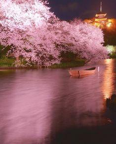 いいね!73.3千件、コメント386件 ― Wonderful Placesさん(@wonderful_places)のInstagramアカウント: 「Cherry Blossom in Japan ✨💖💖💖✨ Picture by ✨✨@daisuke_clover✨✨ . #wonderful_places for a feature 🌸」