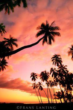 Palm trees at sunset, Molokai, Hawaii
