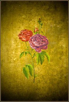 Roses by esraart on DeviantArt