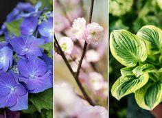 10 blomsterfavoriter i trädgården