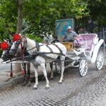 Bulgaria country information Country Information, Bulgarian, Horses, Animals, Animales, Bulgarian Language, Animaux, Animal, Animais