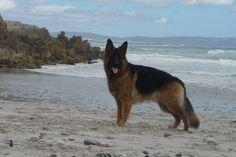 Carling Morton at a beach in Hermanus, Cape Town. Photo taken by Ann Morton,.