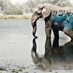 A continuación presentamos 33 campañas publicitarias impactantes con relación a los animales y cómo estos exponen una realidad difícil de enfrentar.