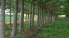 Imagini pentru copaci paulownia Plants, Plant, Planets