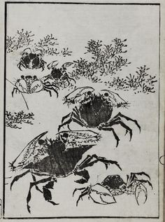 ink on paper; Katsushika Hokusai, Edo Period, Paper Paper, Crabs, Chinese Painting, Conte, Japanese Art, Art Projects, Future