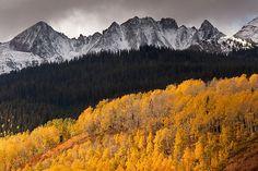 Aspens, Pines, Mountains, Uncompahgre National Forest, Colorado byMark Bergman