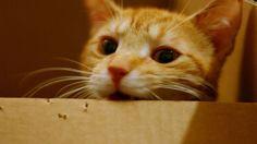 Come preparare uno spuntino veloce per il tuo gatto