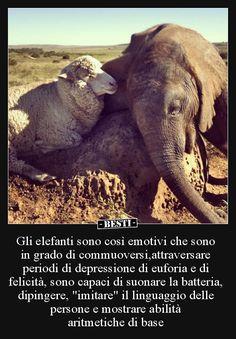 Like Animals, Animals And Pets, Baby Animals, Beautiful World, Animals Beautiful, Magic Words, African Animals, Dog Cat, Elephant