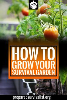 How To Grow Your Survival Garden How To Grow Your Survival Garden,Prepper Self-Sufficiency survival garden - survival and prepping garden basics can be found in this list of 7 survival garden ideas. Grow your own food in this survival garden Skills Homestead Survival, Wilderness Survival, Survival Prepping, Emergency Preparedness, Survival Skills, Survival Gear, Survival Supplies, Survival Food List, Zombies Survival