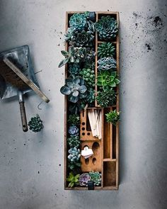 Succulents in a beautiful wooden tray via @rynfrank via Pinterest  || geo-fleur.com #geofleur ||