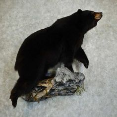 Modern Wood Burning Stoves, Bear Mounts, Hunting Stuff, Trophy Rooms, Black Bear, Taxidermy, Predator, Pedestal, Man Cave