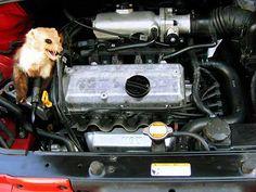 odstraszacz szczurów kun myszy łasic tchórzy samochodowy
