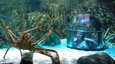 Legoland ja akvaarion ihmeitä Legoland, Aquarium, Goldfish Bowl, Aquarium Fish Tank, Aquarius, Fish Tank
