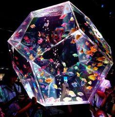 aquarium #AquariumAccessoriesDecorations