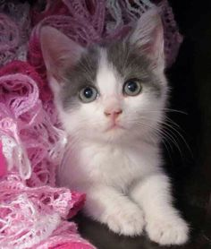 Need A Kitten Fix Foster Homes Urgently Needed Kittens At The Burlington County Animal Shelter Pinterest Home And Kittens
