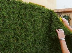 how to beautify a chain link fence - Google Search