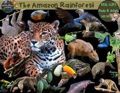 Rainforest Clip Art Animals & Plants Habitats Biome Real C Rainforest Animals, March 21st, Biomes, Nature Pictures, Habitats, Nature Photography, Fonts, Classroom, Internet
