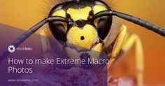 Learn how to capture that tiny world that exists all around us with macro photography.