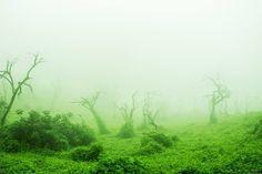 Sueños Verdes Autora: Danae Soto Chang  #TOURSFOTOGRAFICO #Viaje #Naturaleza #Fotografía #Perú #Caminos #Rutas #Paisajes #Postal #Viajeros #Mochileros #Tours #Flora #Fauna #Ruinas #trekking #Trip #visitperu #arribaperu #discoverperu #lachay