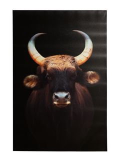 BULL canvas bilde Moose Art, Celestial, Animals, Pictures, Animales, Animaux, Animal, Animais