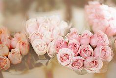 #roses #flower
