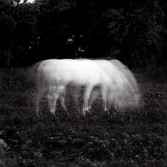 Keith Carter Photographs | The Blue Man