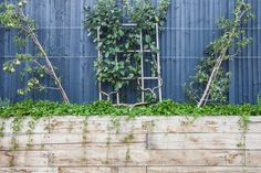 Espalier and cordon fruit trees