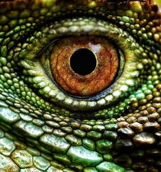 Lizard's Eye - Photo by Ben Kopilow
