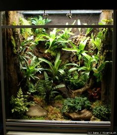 fisch aquarien schlangen and orchideen on pinterest. Black Bedroom Furniture Sets. Home Design Ideas