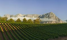 Best Vineyards in South Africa - DuJour South African Wine, Luxury Spa, Luxury Accommodation, Travel Design, Lodges, Vineyard, Journey, Pictures, Outdoor