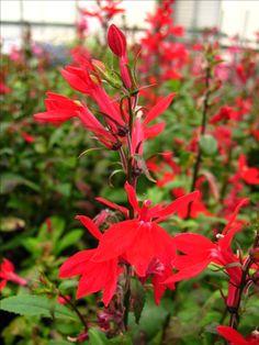 227 Best 2016 Whats Blooming Images Bloom Backyard Garden