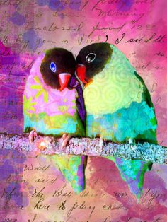 Luvbirds