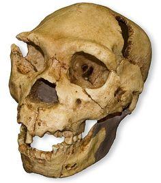 Homo heidelbergensis, Atapuerca.
