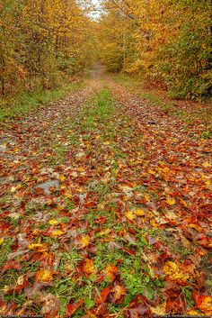 Autumn Leaves on Old Road by Greg from Maine, via Flickr